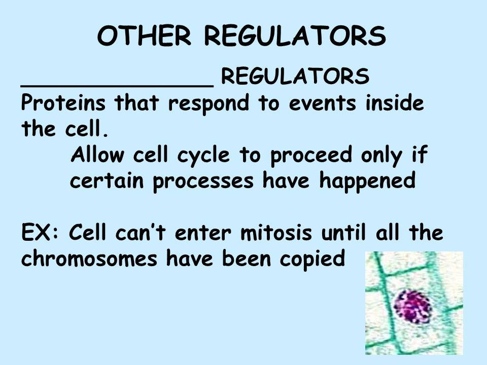 ______________ REGULATORS Proteins that respond to events inside the cell.