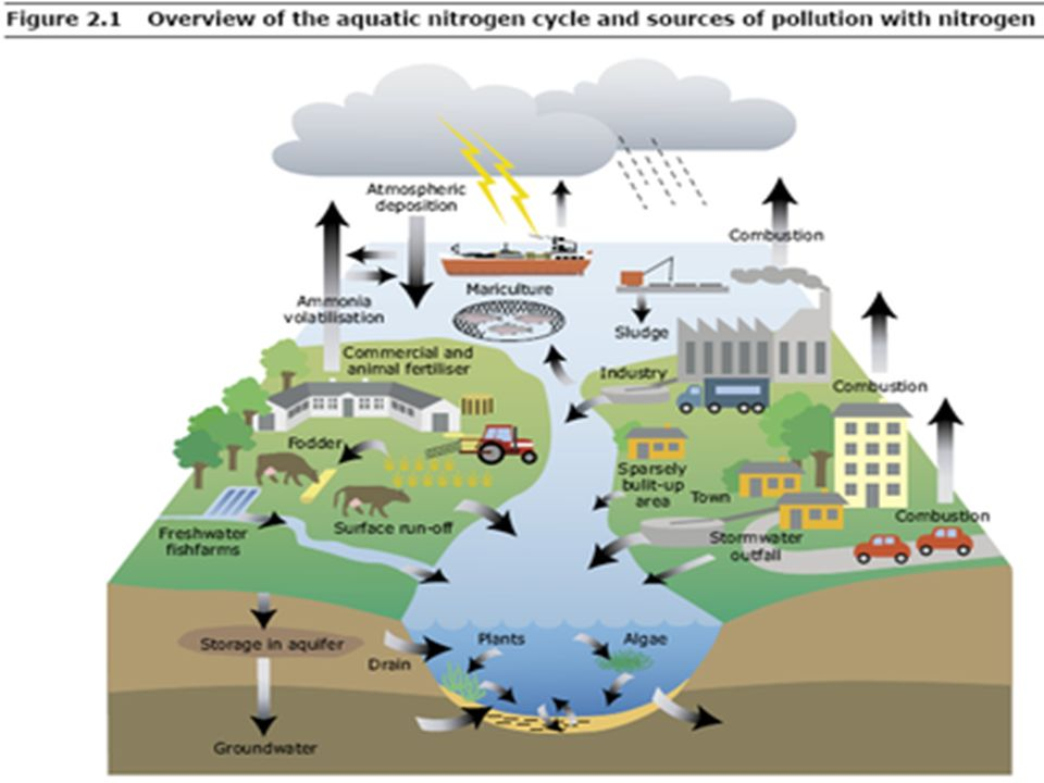 essay on impact of industries on environment Essay on positive and negative impact of industrialization in india and large-scale industries have negative impact which adversely affects the environment.