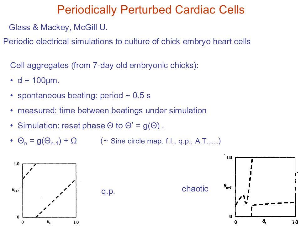 Periodically Perturbed Cardiac Cells Glass & Mackey, McGill U.