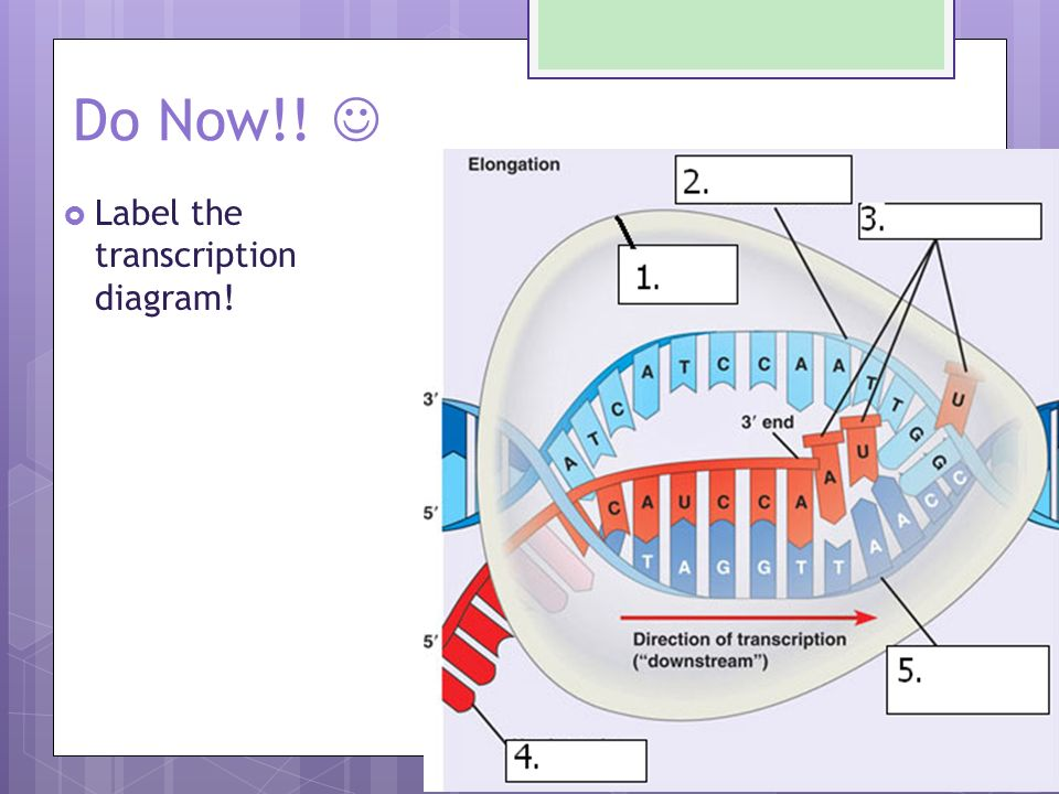 Dna transcription and translation sections 123 and ppt download 25 transcribe this dna to mrna ccuart Gallery