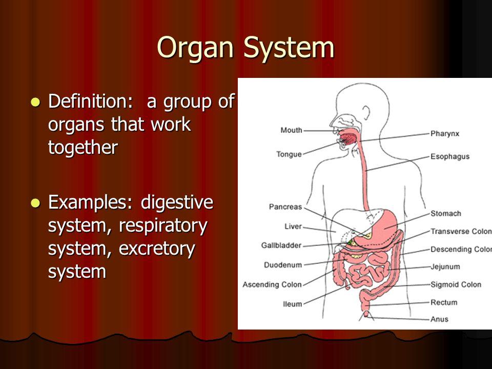 organ system definition, Cephalic Vein