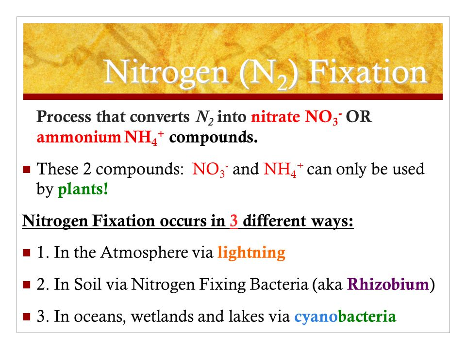 Nitrogen (N 2 ) Fixation Process that converts N 2 into nitrate NO 3 - OR ammonium NH 4 + compounds.