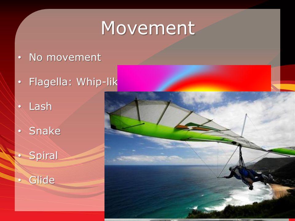 Movement No movement No movement Flagella: Whip-like structure Flagella: Whip-like structure Lash Lash Snake Snake Spiral Spiral Glide Glide