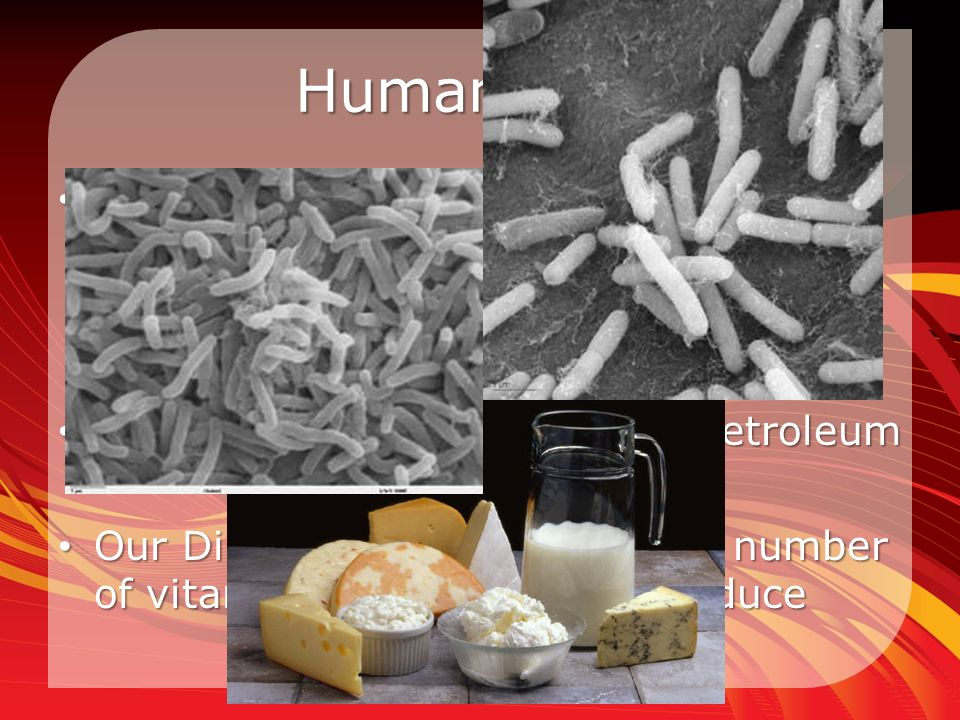 Human Uses Bacteria is in food and beverages Bacteria is in food and beverages – Ex: Yogurt, Dairy products, Vinegar, Sausage, Pickles, anything that ferments (usually) Oil spills: Certain ones digest petroleum Oil spills: Certain ones digest petroleum Our Digestion: E.