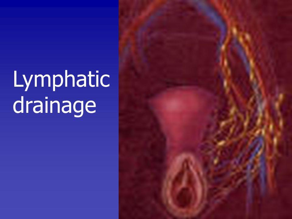 PATHOLOGY Squamous cell 90% Melanoma5-10% Basal cell carcinoma 2% Adenocarcinoma1%