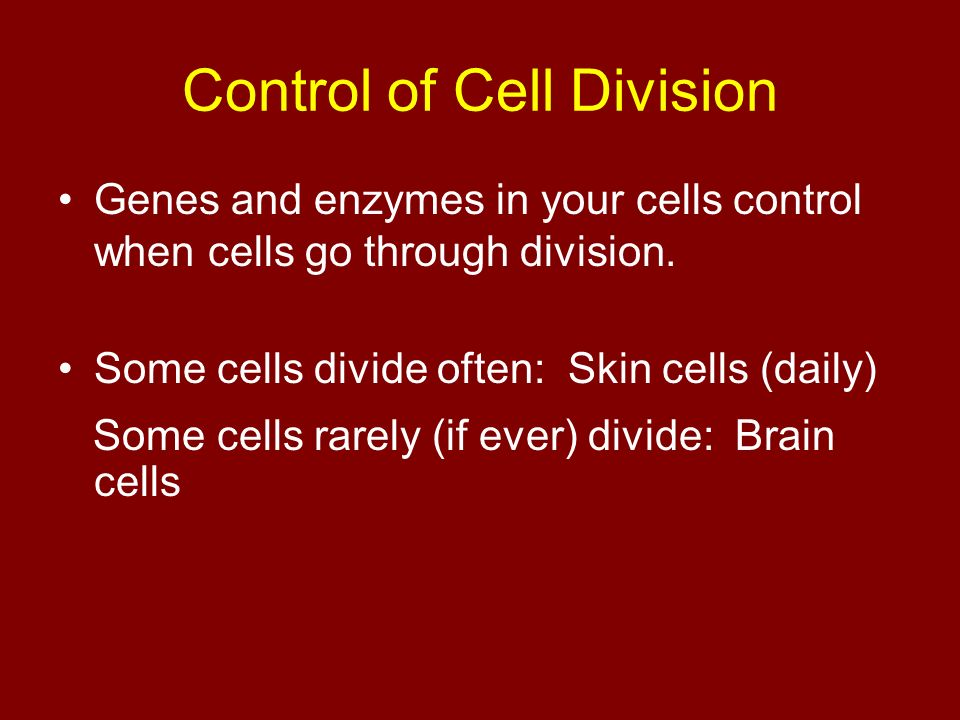 Control of Cell Division Genes and enzymes in your cells control when cells go through division.