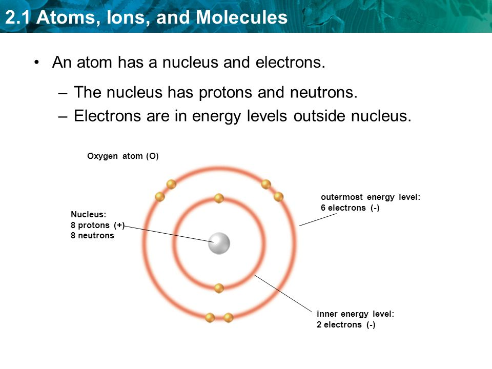 2.1 Atoms, Ions, and Molecules –The nucleus has protons and neutrons.