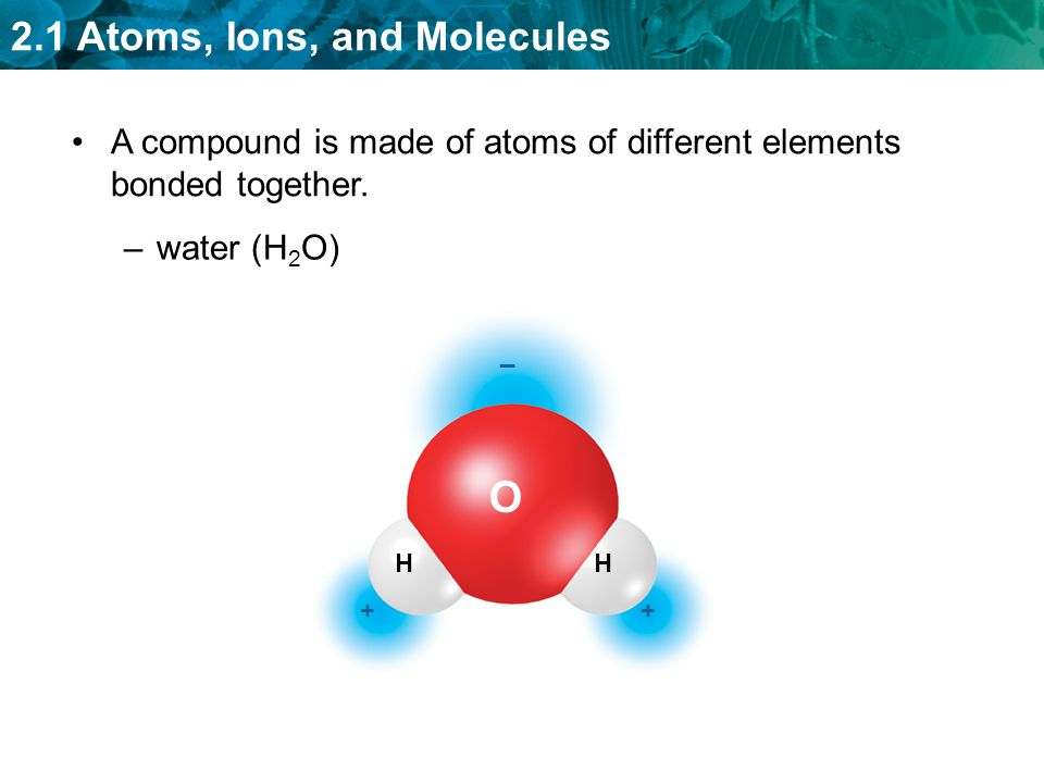 2.1 Atoms, Ions, and Molecules –water (H 2 O) O HH _ ++ A compound is made of atoms of different elements bonded together.