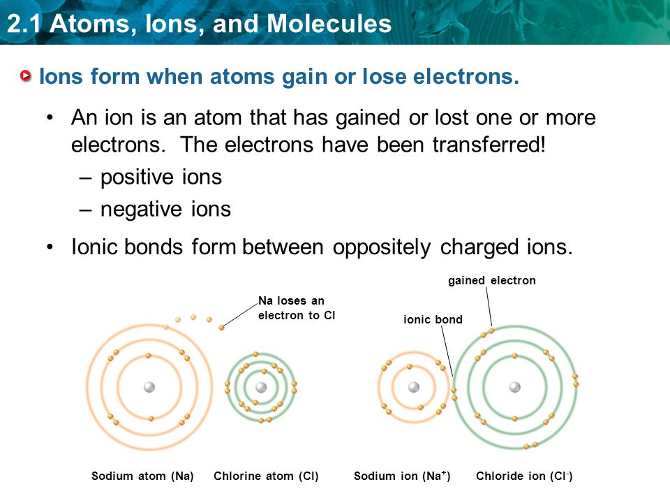 2.1 Atoms, Ions, and Molecules Ions form when atoms gain or lose electrons.