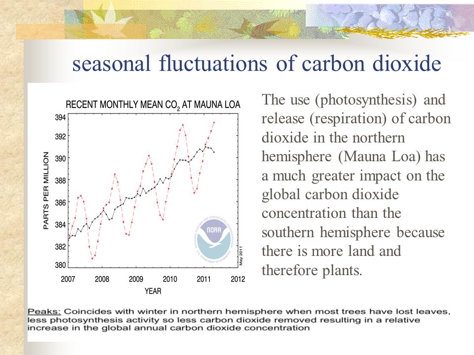 seasonal fluctuations of carbon dioxide The use (photosynthesis) and release (respiration) of carbon dioxide in the northern hemisphere (Mauna Loa) has a much greater impact on the global carbon dioxide concentration than the southern hemisphere because there is more land and therefore plants.