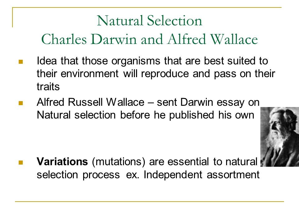 darwin and evolution charles darwin son of robert darwin a  10 natural selection