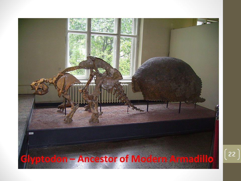 22 Glyptodon – Ancestor of Modern Armadill o