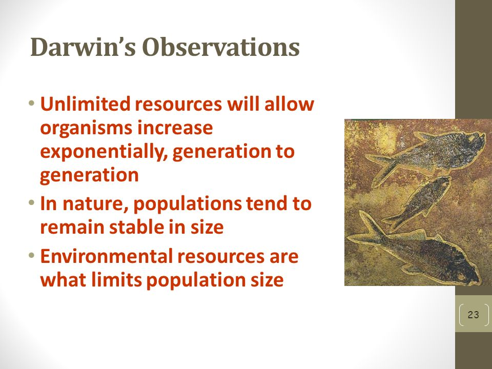 Darwin's Observations Unlimited resources will allow organisms increase exponentially, generation to generation In nature, populations tend to remain stable in size Environmental resources are what limits population size 23