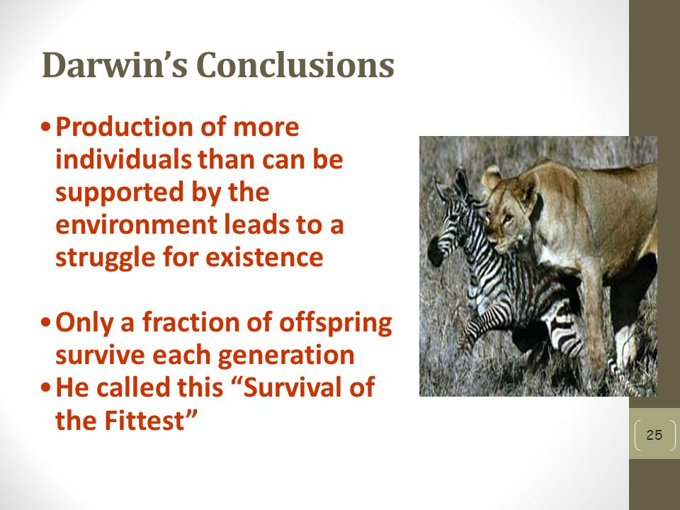 Darwin's Conclusions Production of more individuals than can be supported by the environment leads to a struggle for existence Only a fraction of offspring survive each generation He called this Survival of the Fittest 25