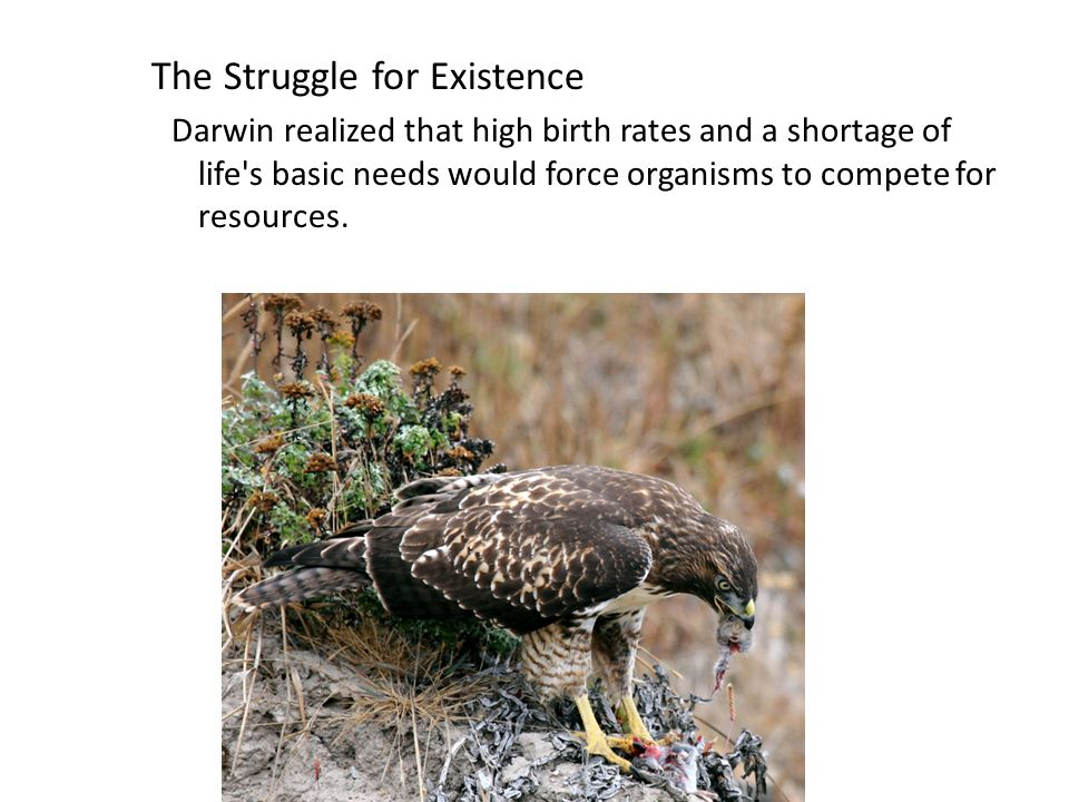 Copyright Pearson Prentice Hall The Struggle for Existence Darwin realized that high birth rates and a shortage of life s basic needs would force organisms to compete for resources.