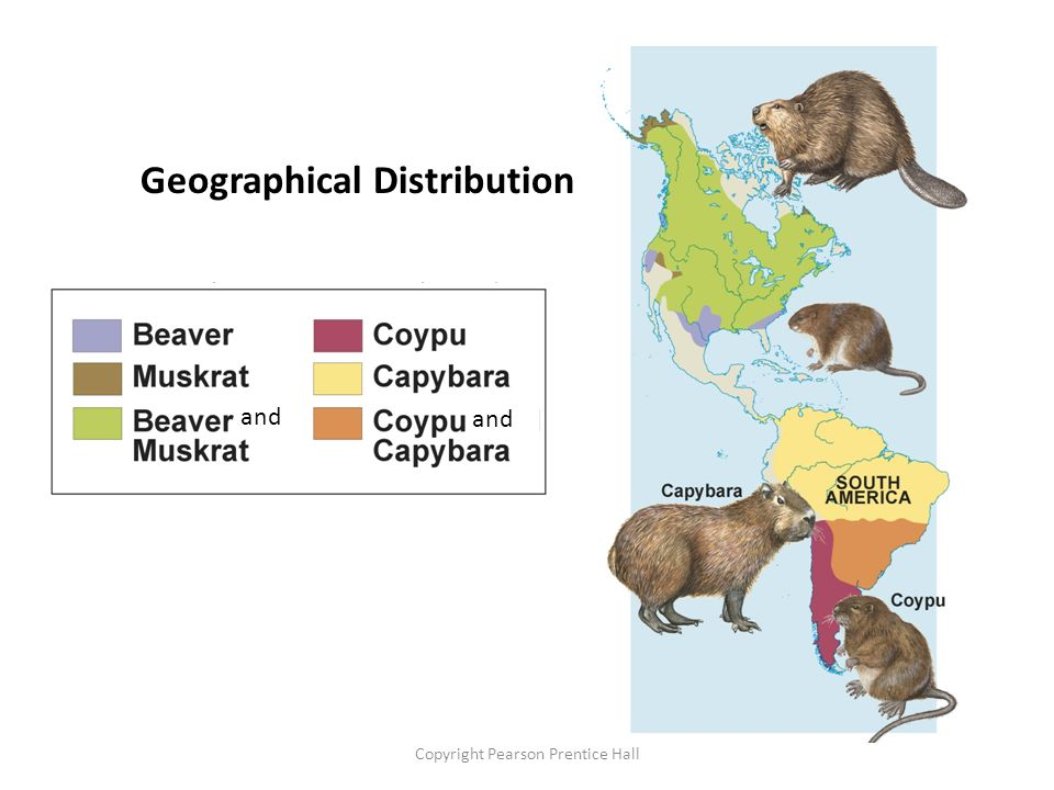 Geographical Distribution Similar, But Unrelated Species and