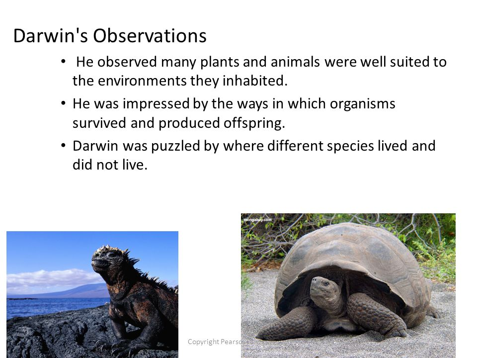 Copyright Pearson Prentice Hall Darwin s Observations He observed many plants and animals were well suited to the environments they inhabited.
