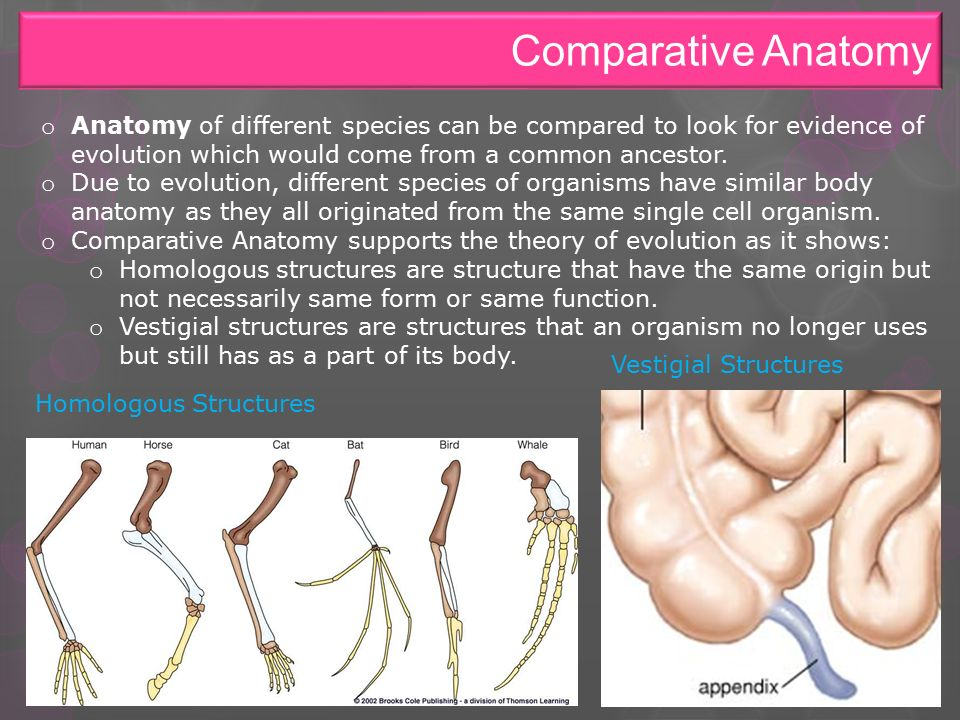 Fantastic How Does Comparative Anatomy Support The Theory Of ...
