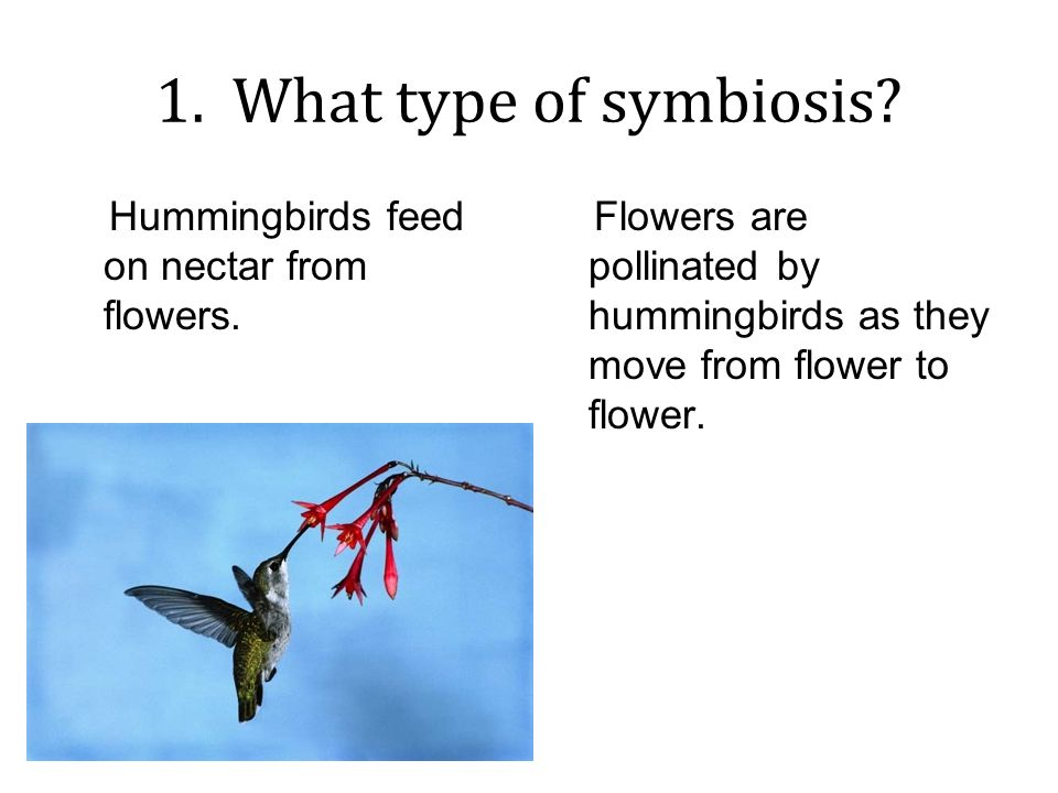 Worksheets Types Of Symbiosis Worksheet types of symbiosis worksheet answers intrepidpath good buds 1 what type hummingbirds feed on