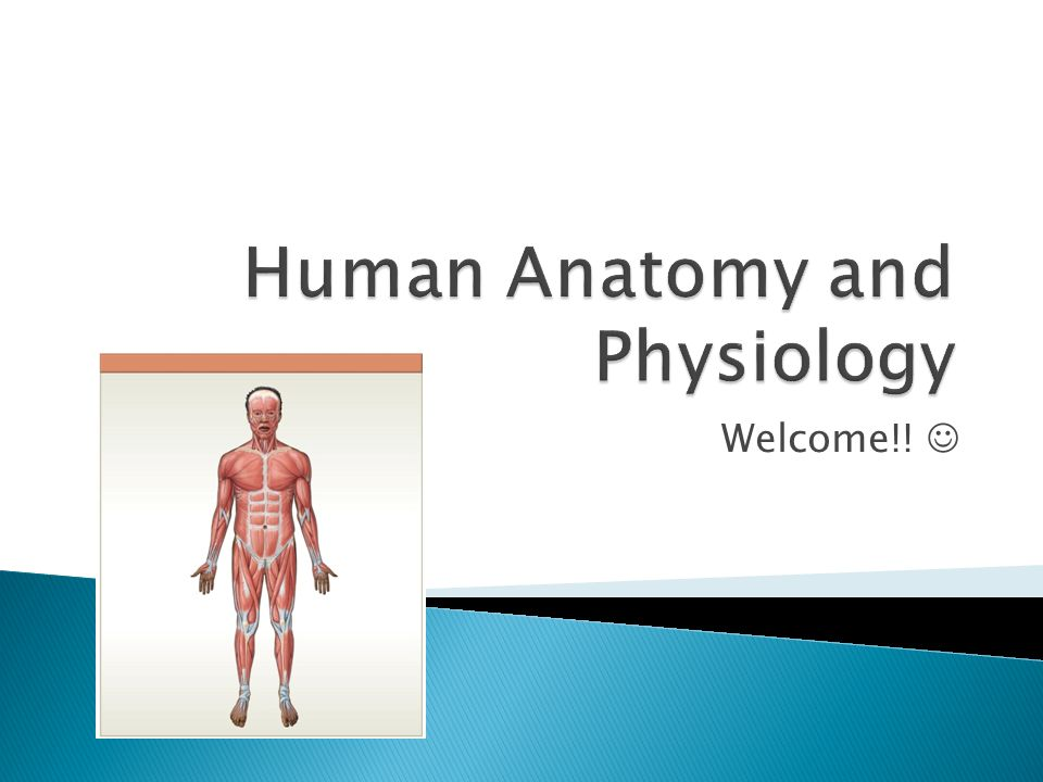 Welcome Welcome To Human Anatomy And Physiology This Is A