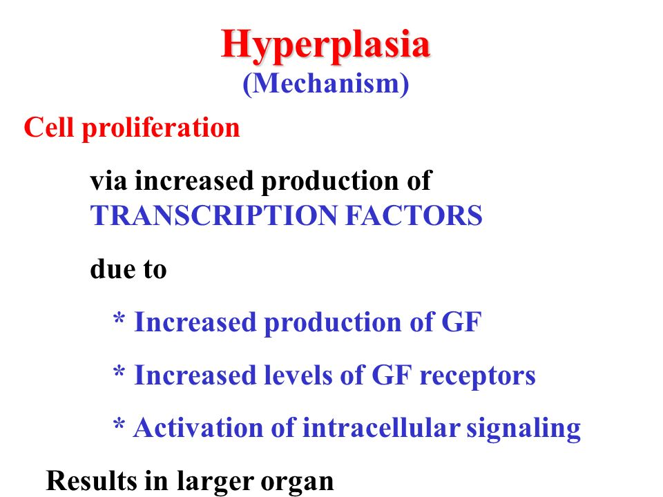 Hyperplasia (Mechanism) Cell proliferation via increased production of TRANSCRIPTION FACTORS due to * Increased production of GF * Increased levels of GF receptors * Activation of intracellular signaling Results in larger organ