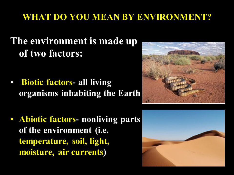 WHAT DO YOU MEAN BY ENVIRONMENT.