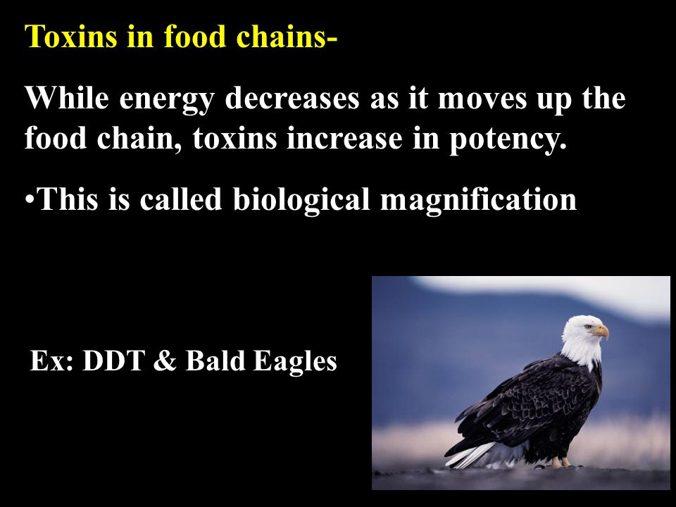 Toxins in food chains- While energy decreases as it moves up the food chain, toxins increase in potency.
