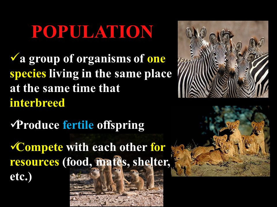 POPULATION a group of organisms of one species living in the same place at the same time that interbreed Produce fertile offspring Compete with each other for resources (food, mates, shelter, etc.)
