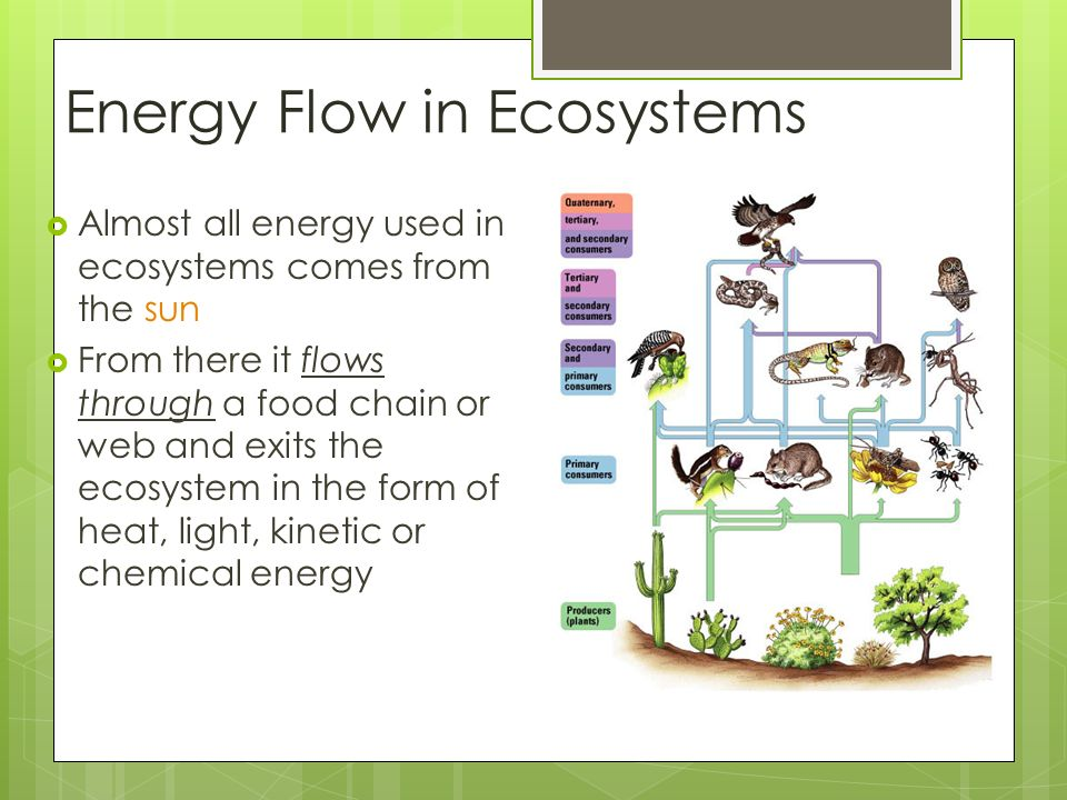 Energy Flow in Ecosystems  Almost all energy used in ecosystems comes from the sun  From there it flows through a food chain or web and exits the ecosystem in the form of heat, light, kinetic or chemical energy