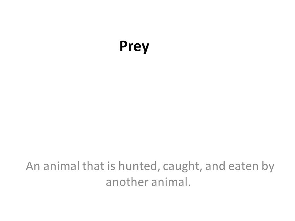 Prey An animal that is hunted, caught, and eaten by another animal.