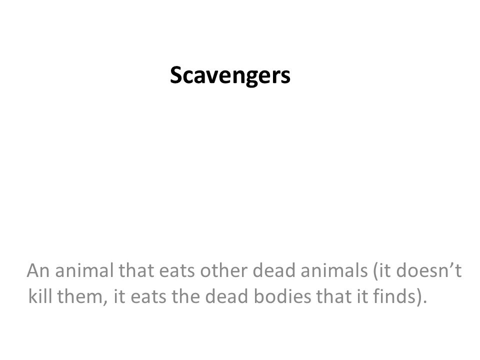 Scavengers An animal that eats other dead animals (it doesn't kill them, it eats the dead bodies that it finds).