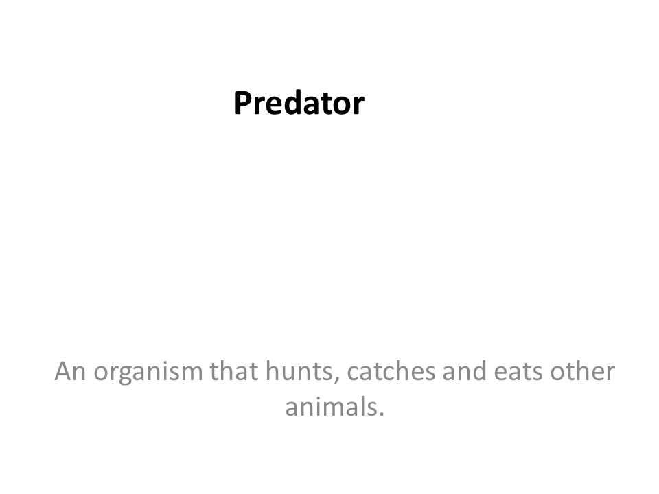 Predator An organism that hunts, catches and eats other animals.