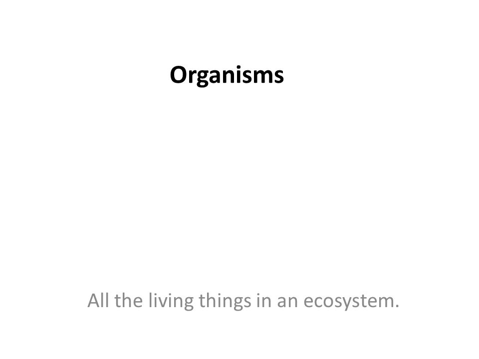 Organisms All the living things in an ecosystem.