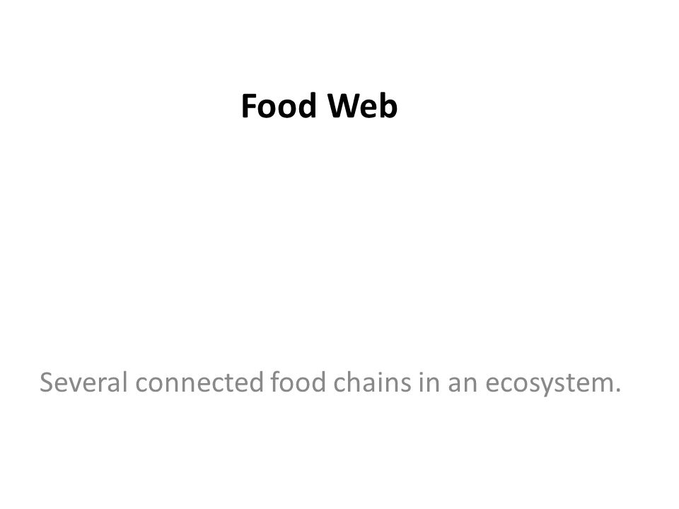 Food Web Several connected food chains in an ecosystem.