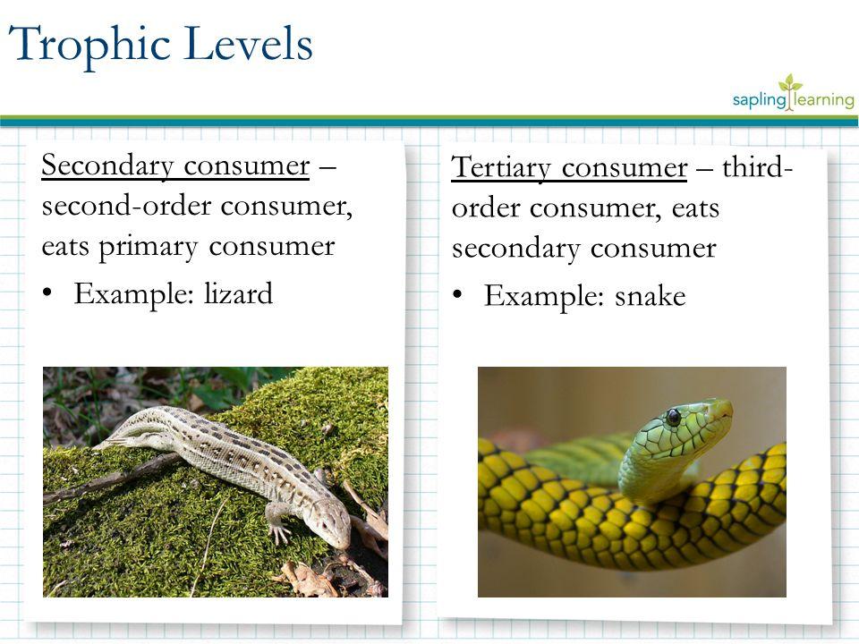 Energy Flow Through Trophic Levels Biology 12c Ppt Download
