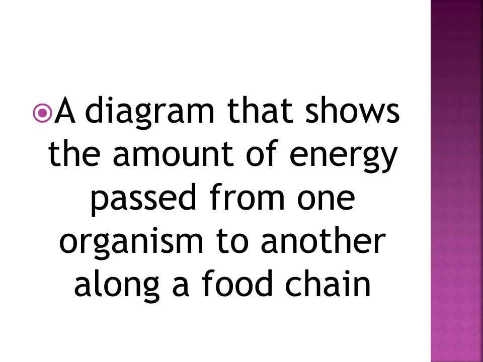  A diagram that shows the amount of energy passed from one organism to another along a food chain
