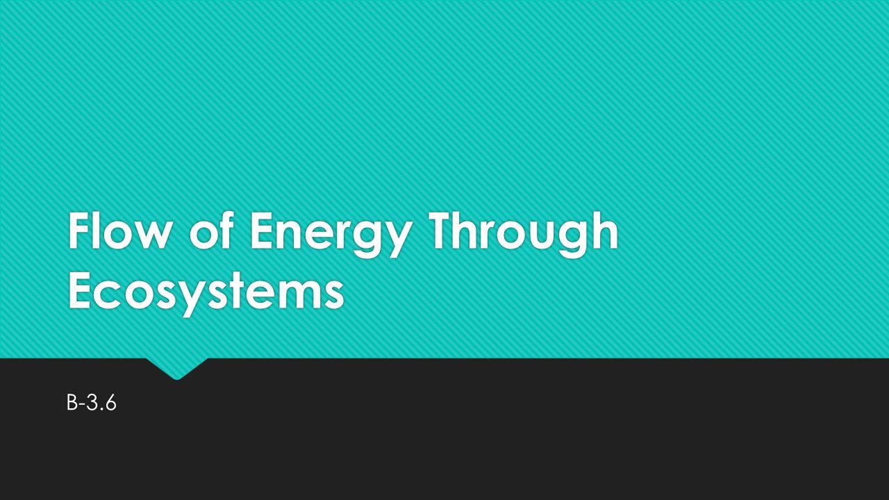Flow of Energy Through Ecosystems B-3.6