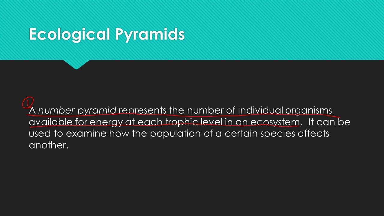 Ecological Pyramids A number pyramid represents the number of individual organisms available for energy at each trophic level in an ecosystem.