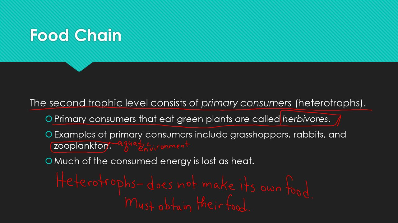 Food Chain The second trophic level consists of primary consumers (heterotrophs).