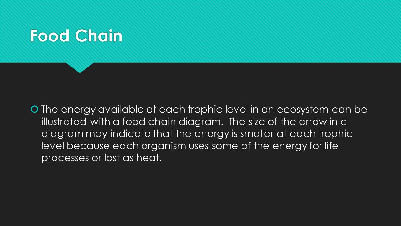 Food Chain  The energy available at each trophic level in an ecosystem can be illustrated with a food chain diagram.