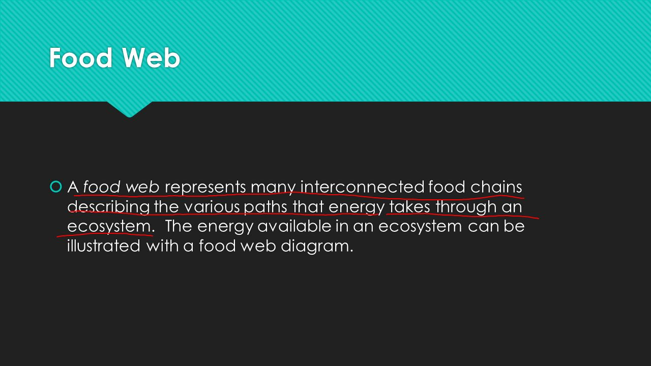 Food Web  A food web represents many interconnected food chains describing the various paths that energy takes through an ecosystem.