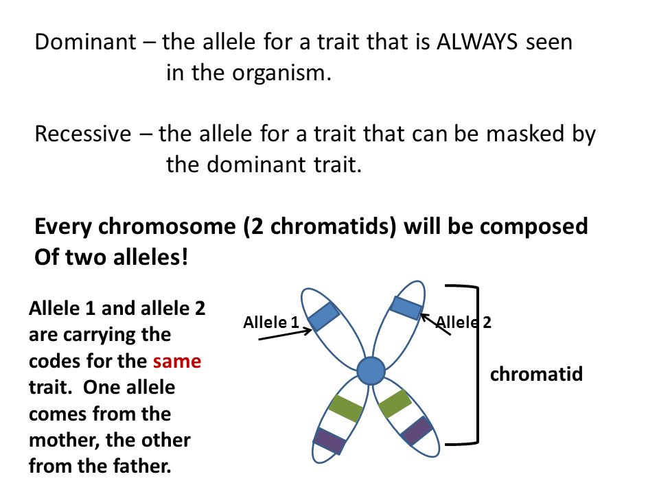 Dominant – the allele for a trait that is ALWAYS seen in the organism.
