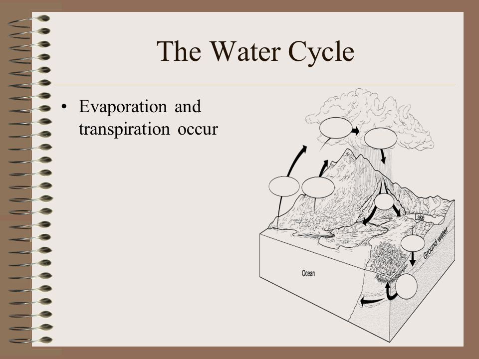 The Water Cycle Evaporation and transpiration occur