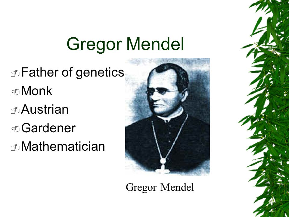 the scientific work of gregor mendel the father of genetics Gregor mendel was an austrian monk who discovered the father of genetics aka gregor mendel eyesight kept him from continuing any extensive scientific work.