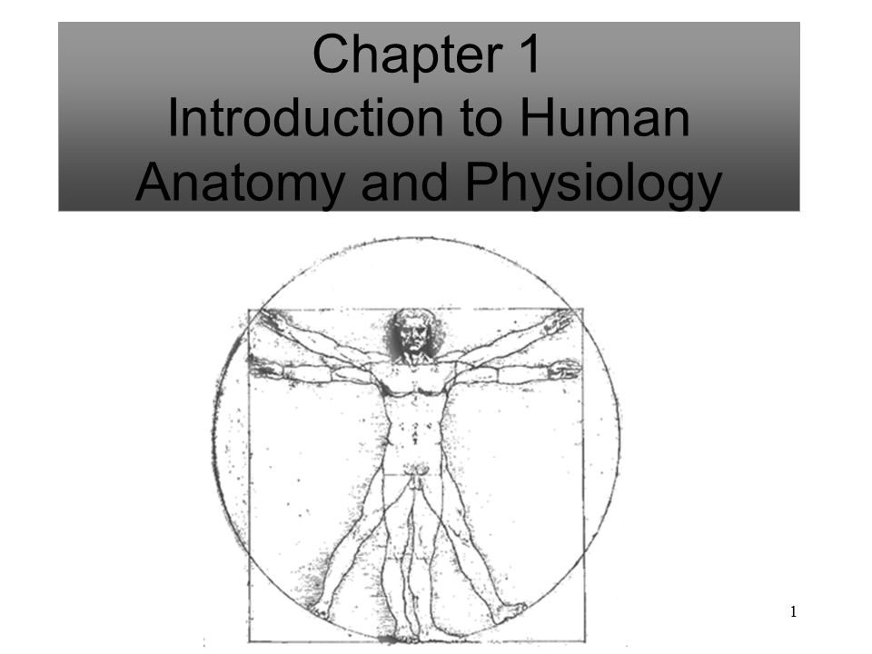 Ausgezeichnet Introduction To Human Anatomy And Physiology Ppt Ideen ...