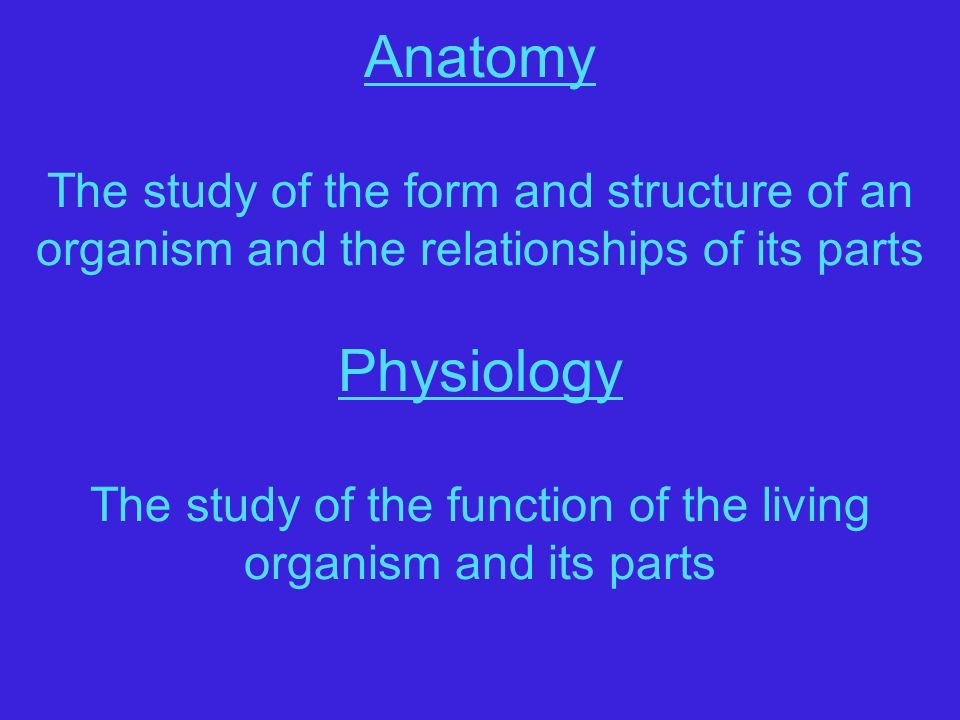 Human Anatomy and Physiology I Chapter 1 Definitions - Terminology ...