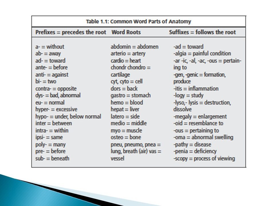 Fine Anatomy Prefixes And Suffixes List Picture Collection - Anatomy ...