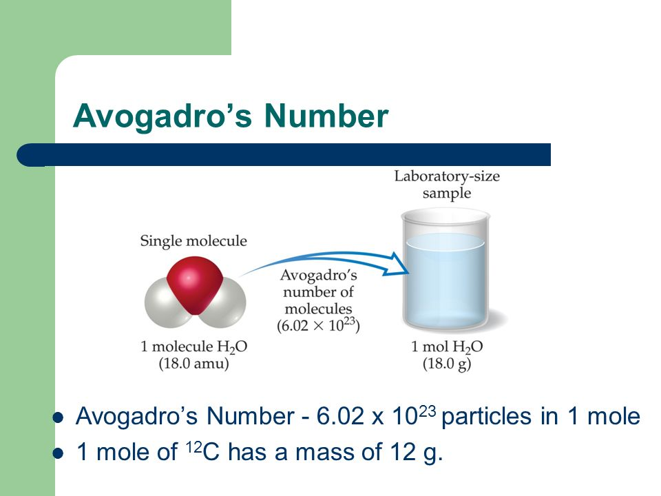 Avogadro's Number Avogadro's Number x particles in 1 mole 1 mole of 12 C has a mass of 12 g.