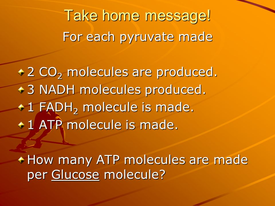 Take home message. For each pyruvate made 2 CO 2 molecules are produced.