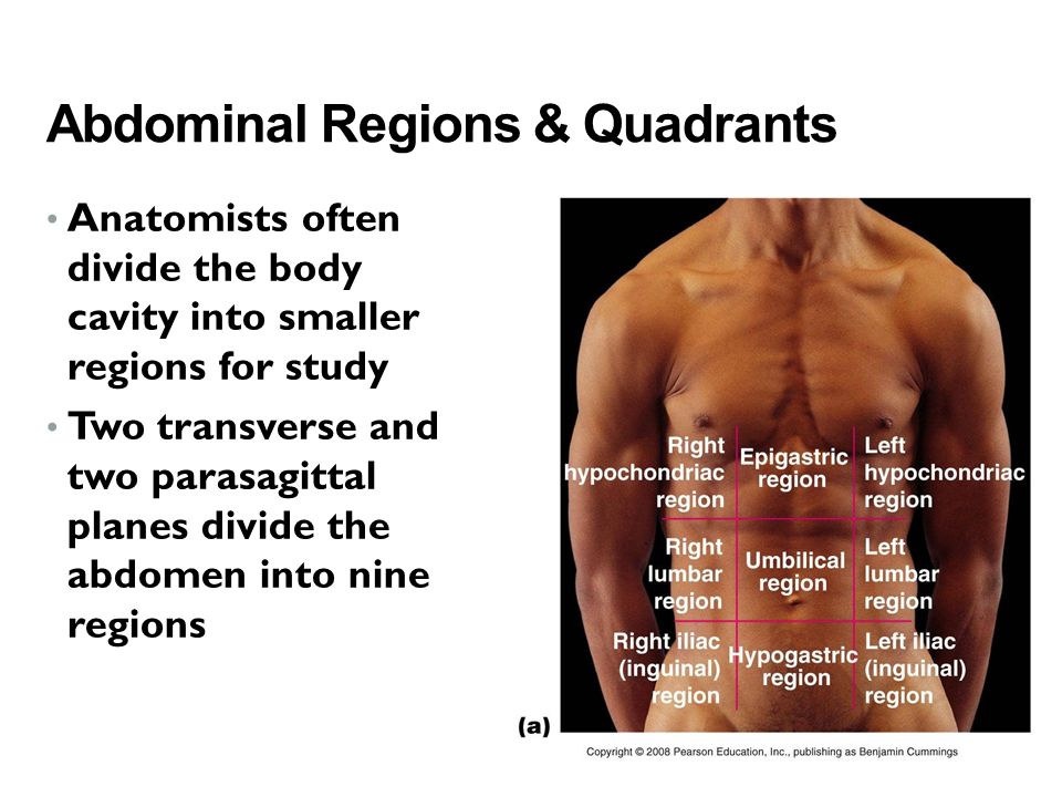 Abdominal Regions & Quadrants Anatomists often divide the body cavity into smaller regions for study Two transverse and two parasagittal planes divide the abdomen into nine regions